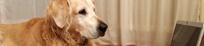 Markus Beyer - Hundetrainer Berlin -Ausbildung Bürohund