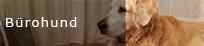 Ausbildung zum Bürohund - Hundetrainer Markus Beyer, Berlin