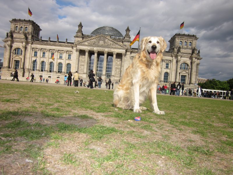 Neues Hundegesetz Berlin - Jetzt handeln!