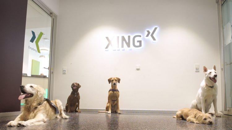 XING Bürohund Video