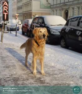 Hundetrainer Markus Beyer, Berlin: Hunde im Winter
