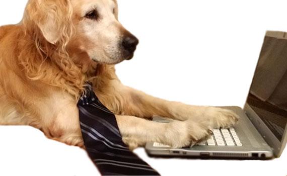 Ausbildung von Bürohunden in Berlin - Hundetraier Markus Beyer