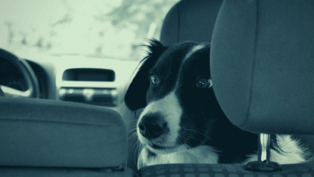 Hundetrainer Berlin - Angst vor dem Autofahren