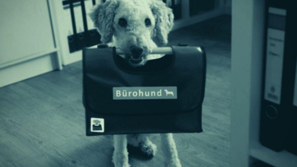 Hundetrainer Berlin - Ausbildung zum Bürohund
