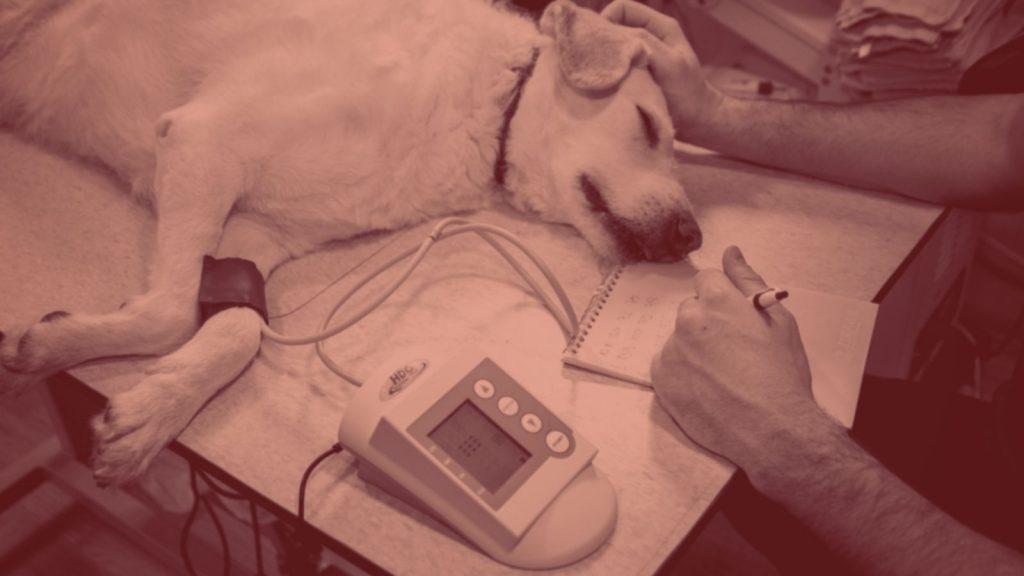 Hundetrainer Berlin - Für Hunde giftig