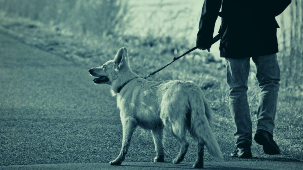 Hundetrainer Berlin - Hund zieht an der Leine