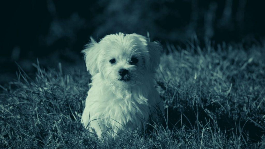 Hundetrainer Berlin - Lösung von Problemen im Umgang mit Hunden