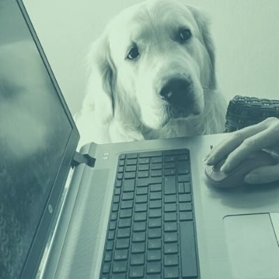 Hundetrainer Berlin - Hund im Büro