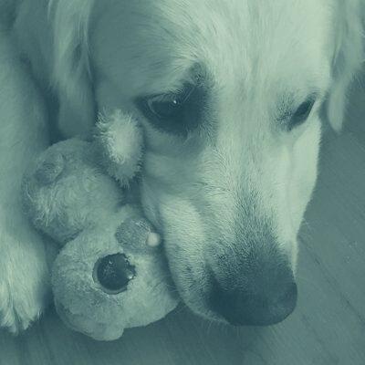 Hundetrainer Berlin - Verlustangst bei Hunden