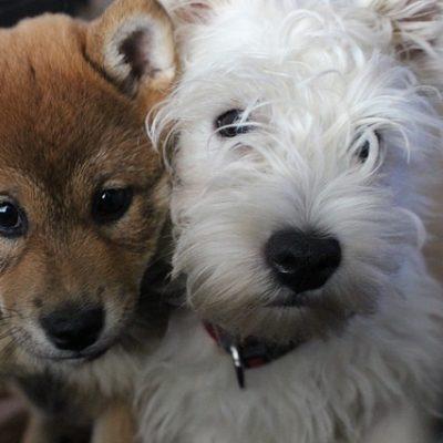 Hundetrainer Berlin - Coaching bei Ihnen vor Ort: das wichtige Wissen